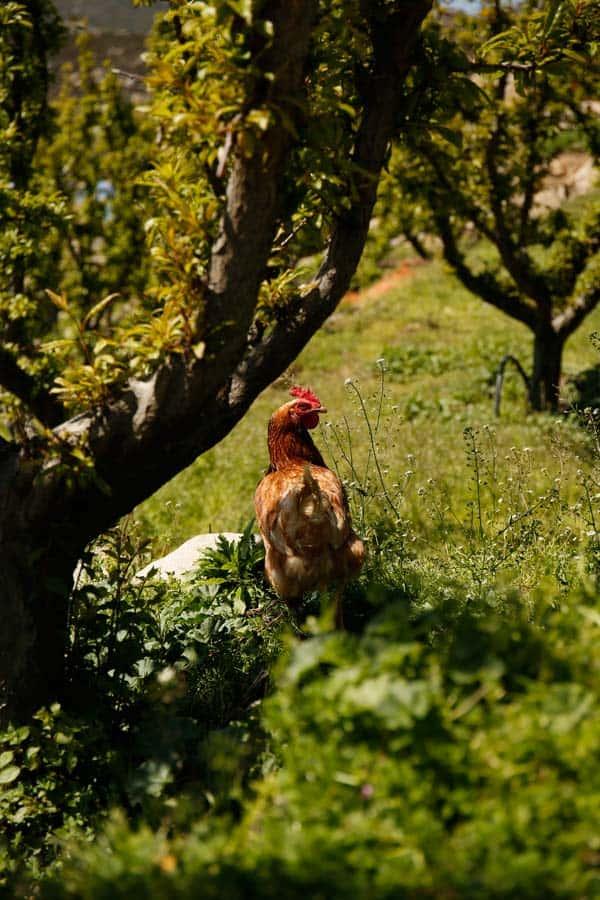 Barozzi Farm To Table
